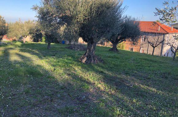 terreno edificabile fronte strada - Agenzia Immobiliare Rubino Pescara